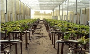 Cultivo de hortaliças em sistema hidropônico. Foto: Fapesb