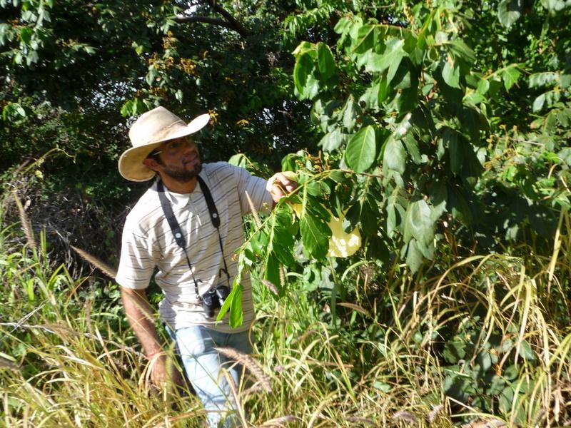 Coleta de sementes da mata ciliar na UNEB. Foto: Arquivo