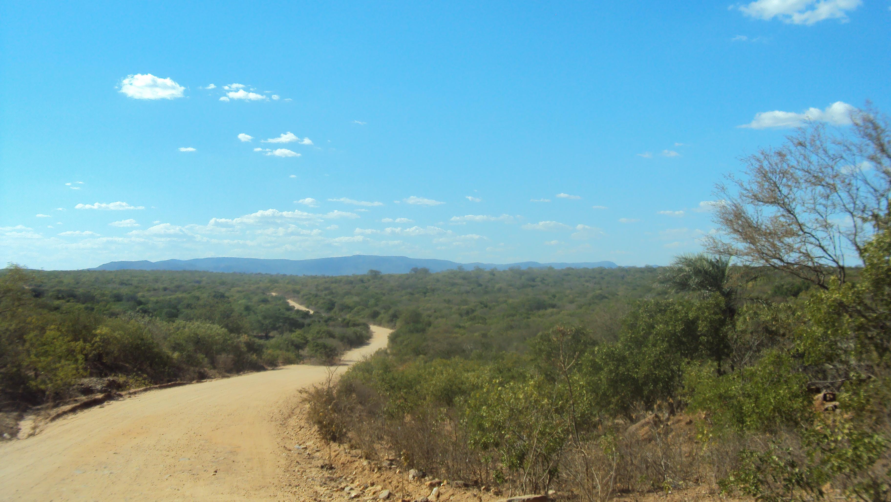 A Caatinga ainda é um bioma pouco preservado e estudado. Foto: Liliana Peixinho.