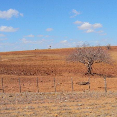 Pasto desertificado. Foto: Liliana Peixinho.